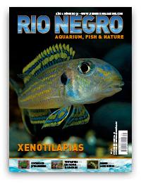 Revista Rio Negro 31