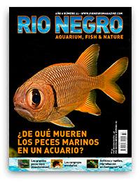 Revista Rio Negro 33