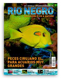 Revista Rio Negro 34