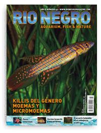 Revista Rio Negro 43