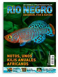 Revista Rio Negro 48