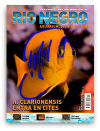 Revista Rio Negro 32