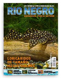 Revista Rio Negro 36