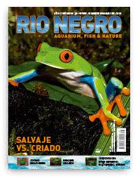 Revista Rio Negro 38