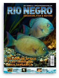 Revista Rio Negro 39