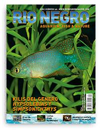 Revista Rio Negro 40
