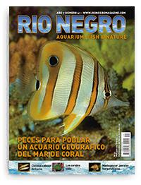 Revista Rio Negro 41