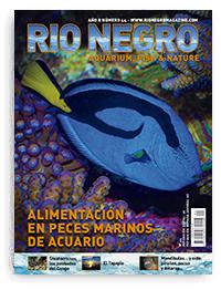 Revista Rio Negro 44