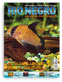 Revista Rio Negro 45