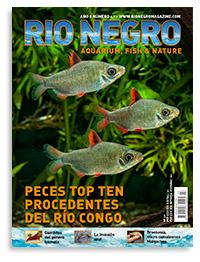 Revista Rio Negro 47