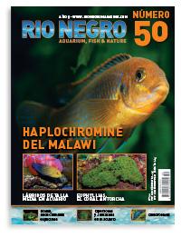 Revista Rio Negro 50
