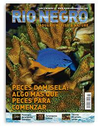 Revista Rio Negro 51